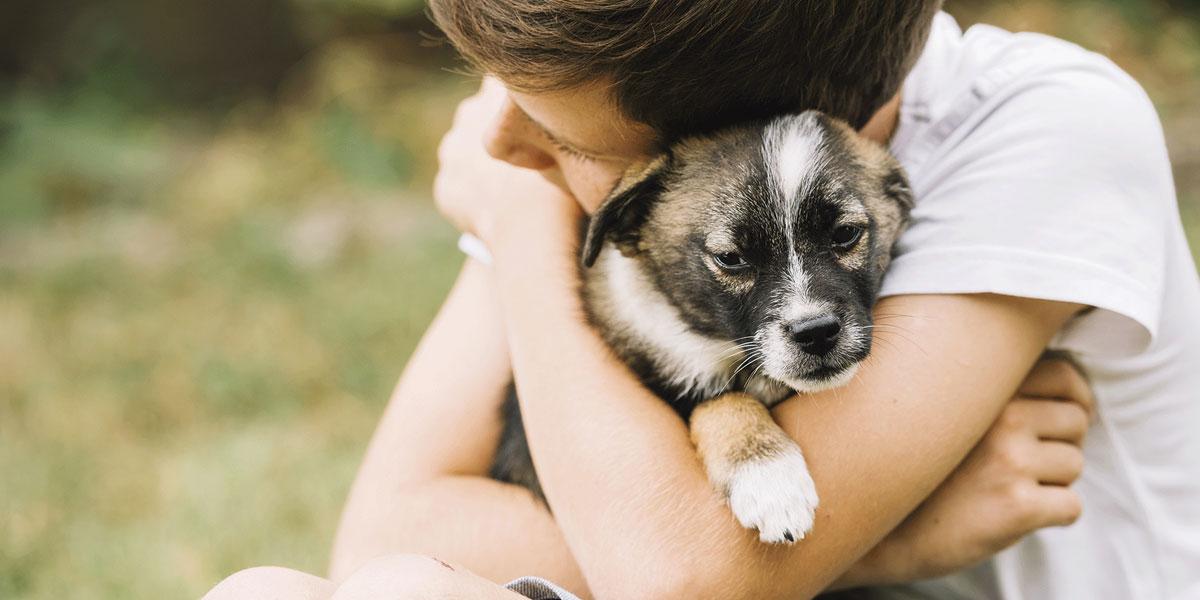 Como Escolher o Melhor Plano para o seu Pet