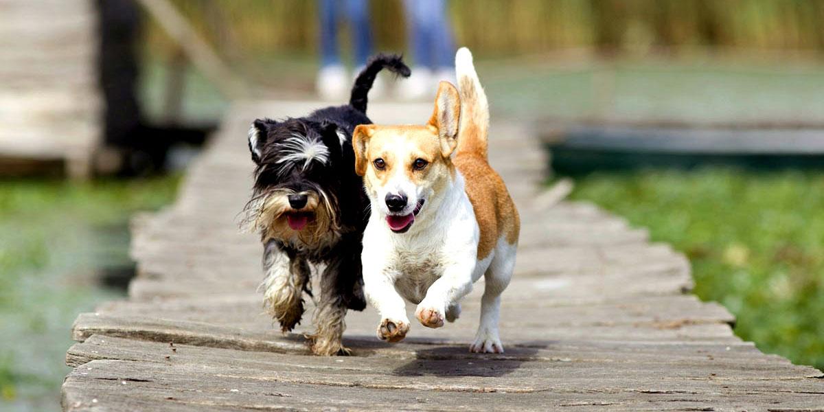 5 Motivos para você ter um Plano de Saúde para seu Pet