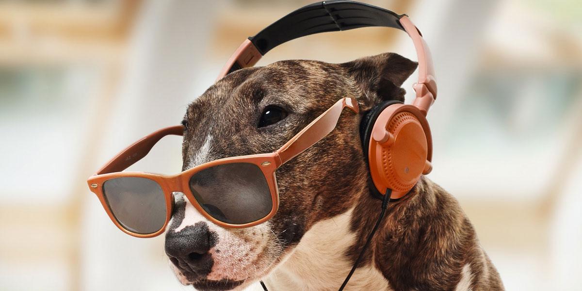A Música e o Seu Cachorro