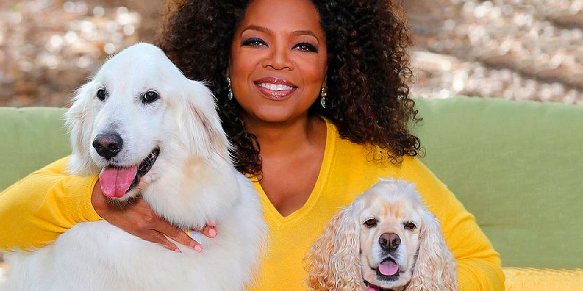 Mulheres de sucesso têm cachorros
